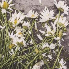 Co jest pożytecznego w dawaniu kobiecie kwiatów?